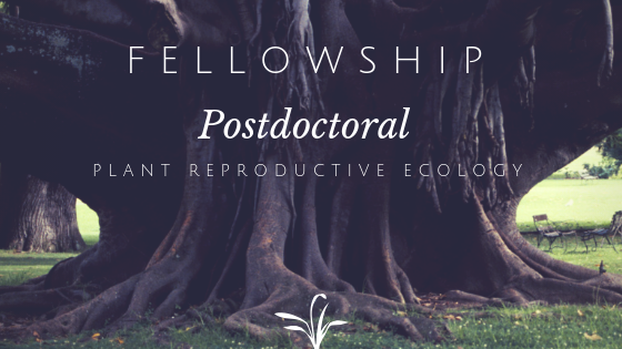 Announcement: Postdoctoral fellowship, UFS, Qwaqwa